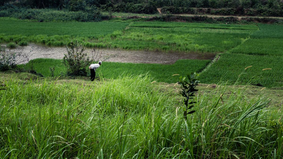 Vieille dame rizière vietnam