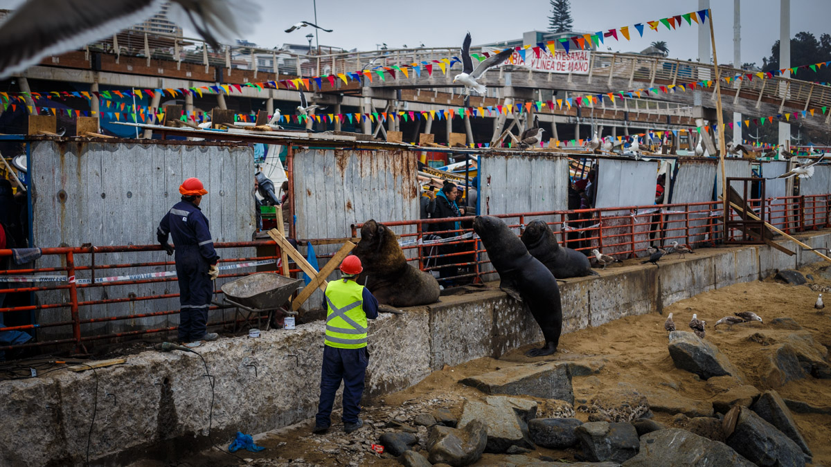 Les habitués du marché ou comment freiner les travaux publics, Valparaíso