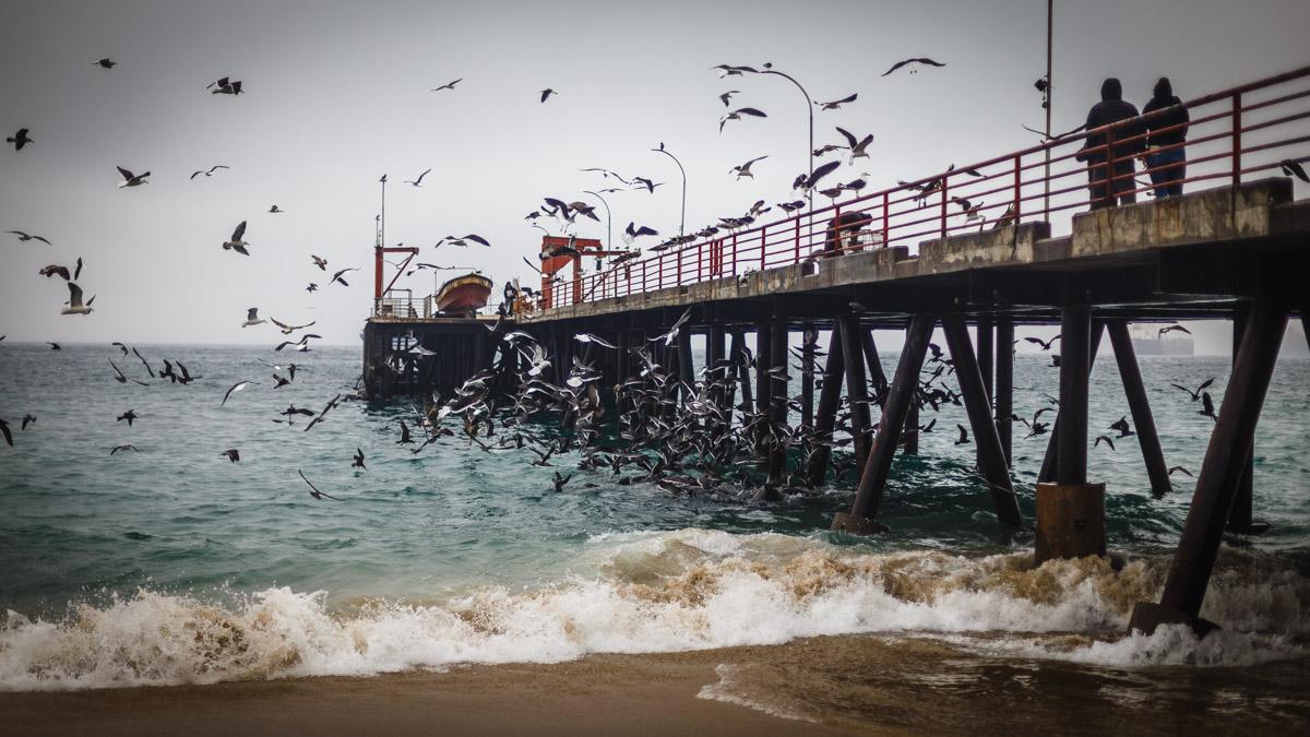 La bataille pour les restes de poissons, Valparaíso