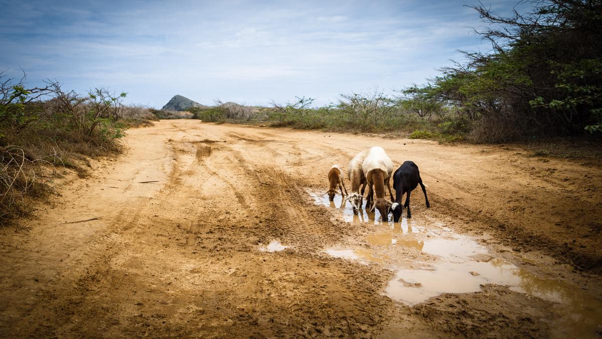 Жители пустыни, Кабо де ла Вела